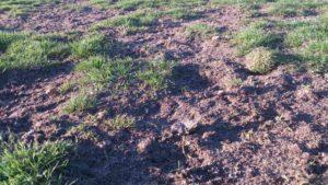Platzsperre wegen Sanierung Rasenfläche